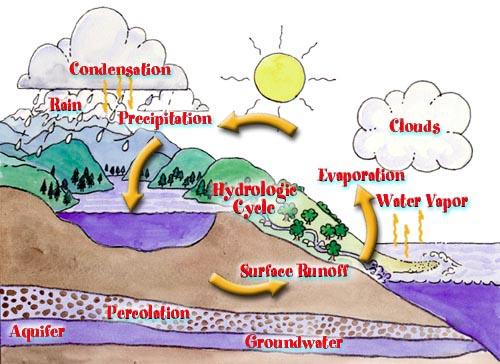 Ekologi tumbuhan (cahaya, suhu, dan air)